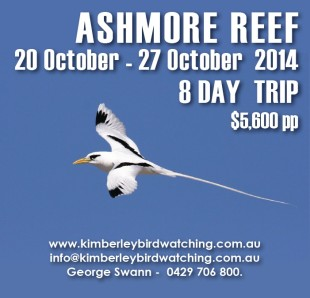 Ashmore Reef birdwatching cruise 2014